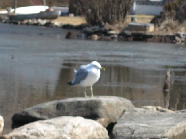 Seagull Lake Mahopac